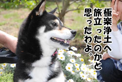 20110504_0853.jpg