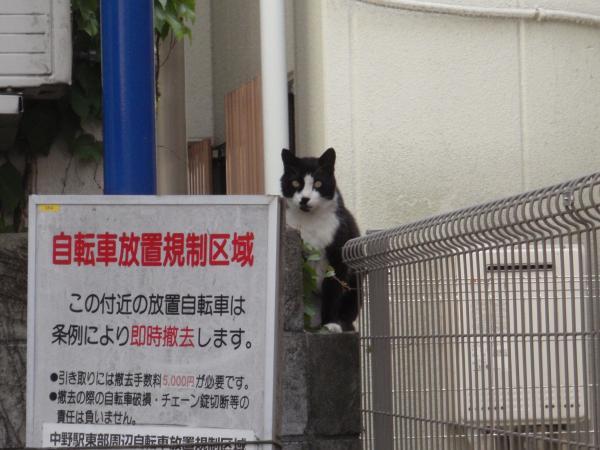 中野の猫2