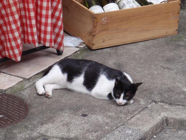 中野の猫1
