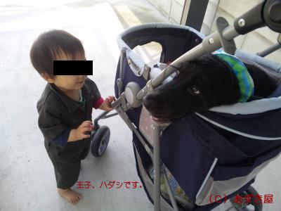 azuki494.jpg
