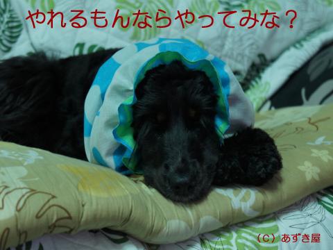 azuki515.jpg