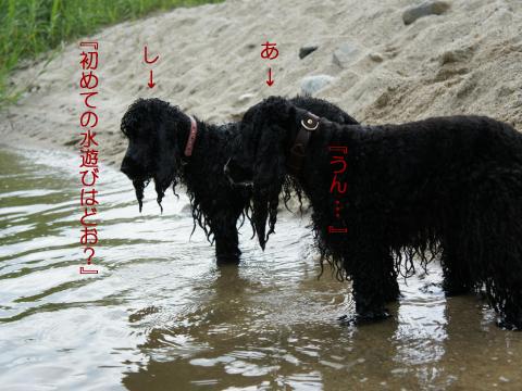 azuki645.jpg