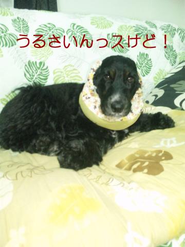 azuki664.jpg
