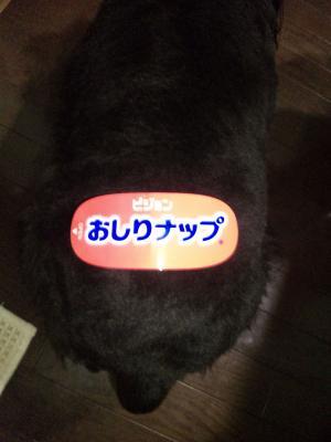 azuki665.jpg