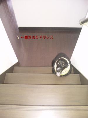 azuki678.jpg