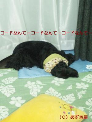 azuki687.jpg