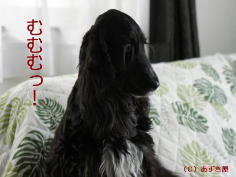 azuki688.jpg