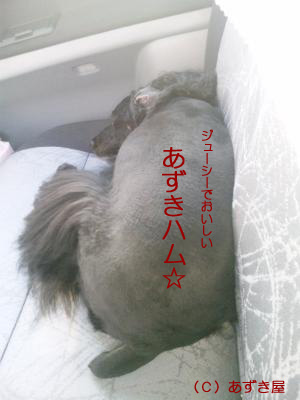 azuki689.jpg