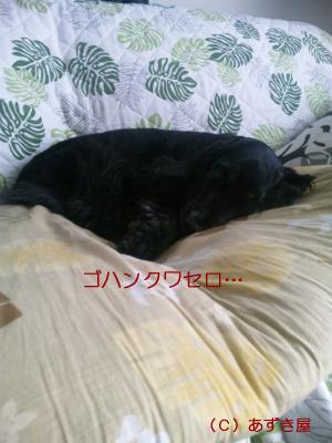 azuki732.jpg