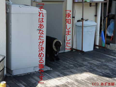 azuki759.jpg