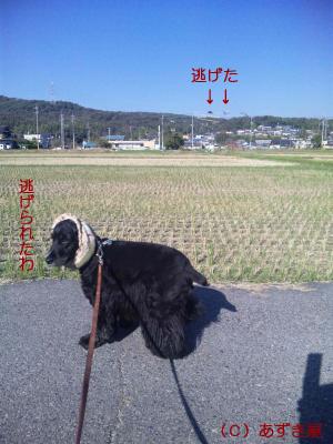 azuki761.jpg