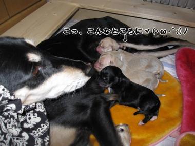 Puppy_100104_01.jpg