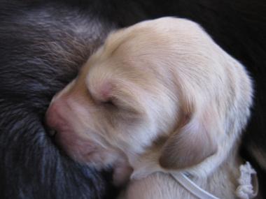 Puppy_100105_03.jpg