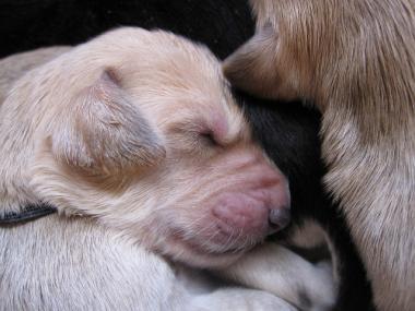 Puppy_100107_04.jpg