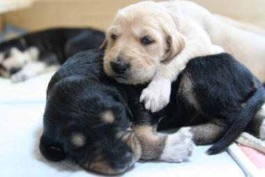 Puppy_100119_03.jpg