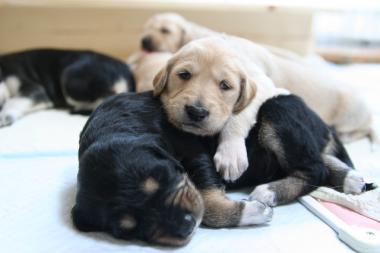 Puppy_100119_04.jpg