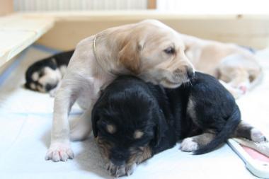 Puppy_100119_05.jpg