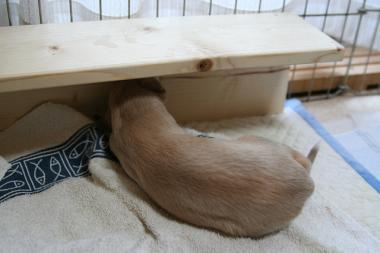 Puppy_100119_21.jpg