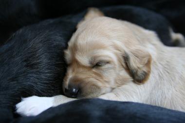Puppy_100119_34.jpg