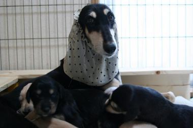 Puppy_100119_43.jpg
