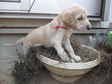 Puppy_100130_01.jpg