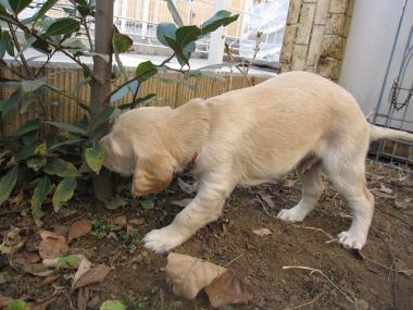 Puppy_100130_02.jpg