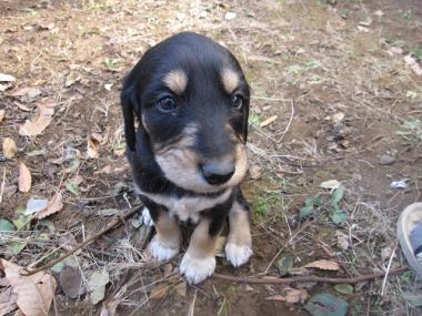 Puppy_100130_03.jpg