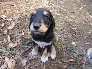 Puppy_100130_04.jpg