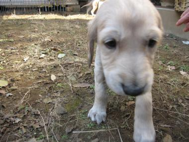Puppy_100130_05.jpg