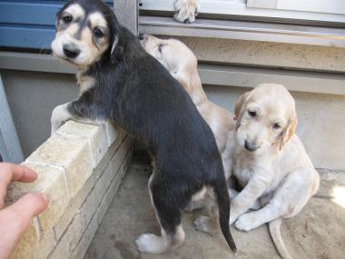 Puppy_100130_06.jpg