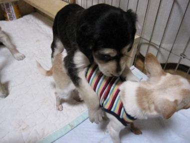 Puppy_100130_15.jpg