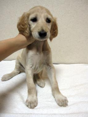 Puppy_100210_03.jpg