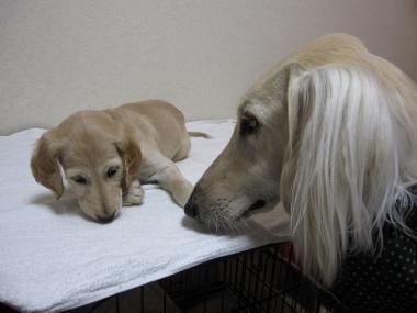Puppy_100210_14.jpg