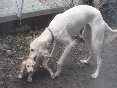 Puppy_100211_01.jpg