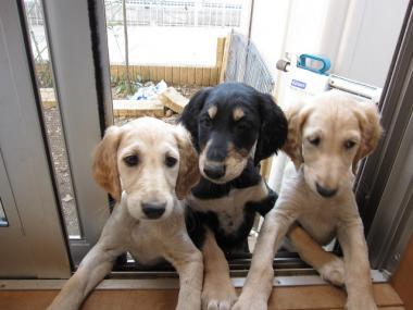 Puppy_100224_04.jpg
