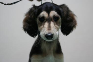Puppy_100228_10.jpg