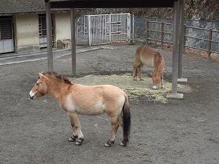 201202多摩動物園 013