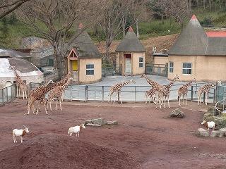 201202多摩動物園 031