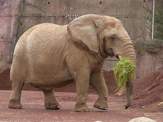 201202多摩動物園 040