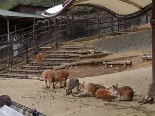 201202多摩動物園 045