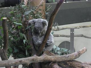 201202多摩動物園 047