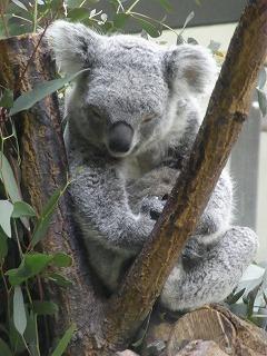201202多摩動物園 048