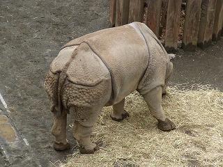 201202多摩動物園 051