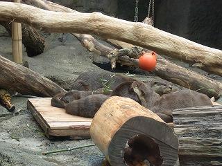 201202多摩動物園 055