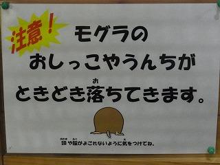 201202多摩動物園 059