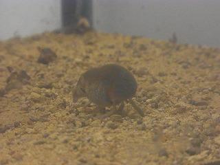 201202多摩動物園 063