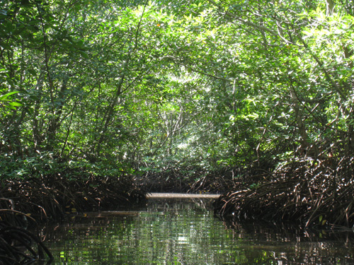 深い深いマングローブの森がどこまでも続いています。