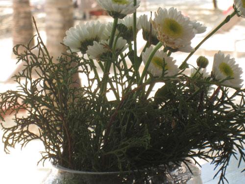 南さんの花