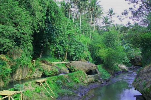 20111005green-008.jpg