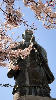 日蓮上人と桜